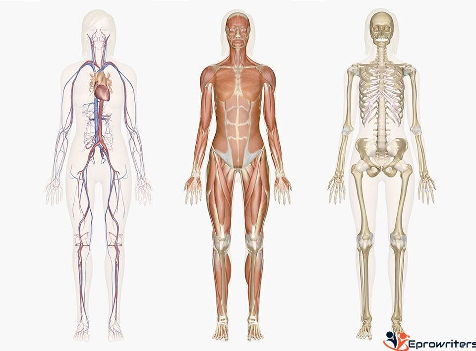 Discussion 5.1: Endocrine System Functions